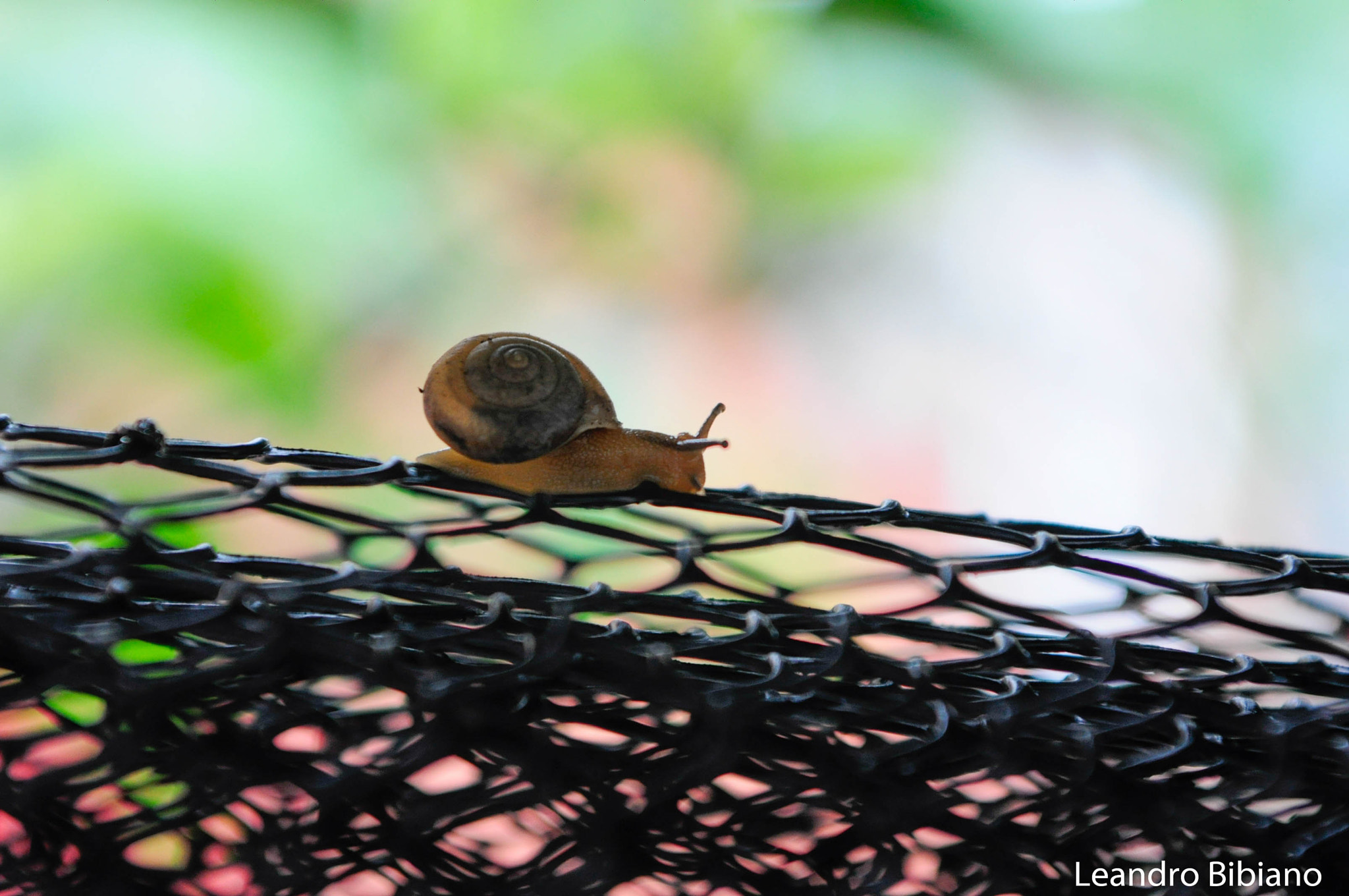 Photograph Caracol by Leandro Bibiano on 500px