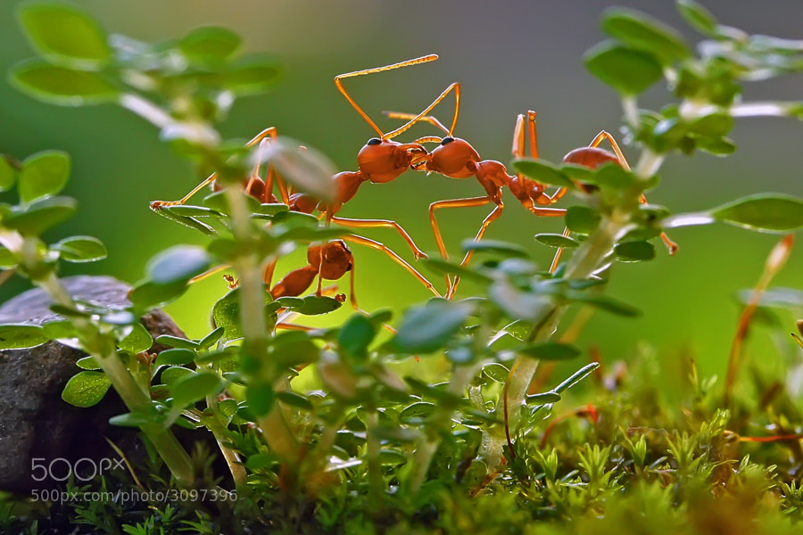 Photograph romance in the bush by teguh santosa on 500px