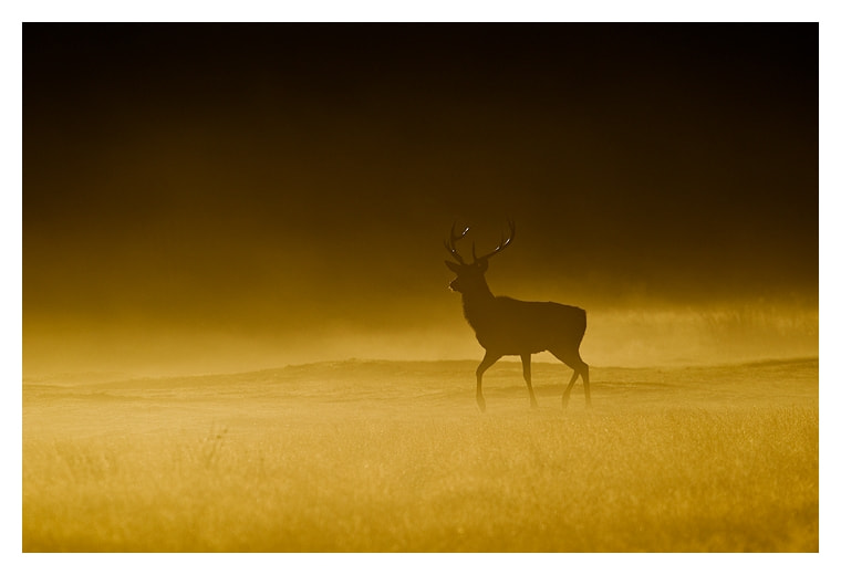 Photograph Out of the mist by Jules Cox on 500px