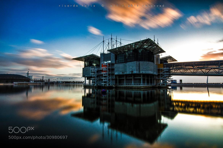 Photograph Lisbon Oceanarium - Parque das Nações #3 by Ricardo Bahuto Felix on 500px