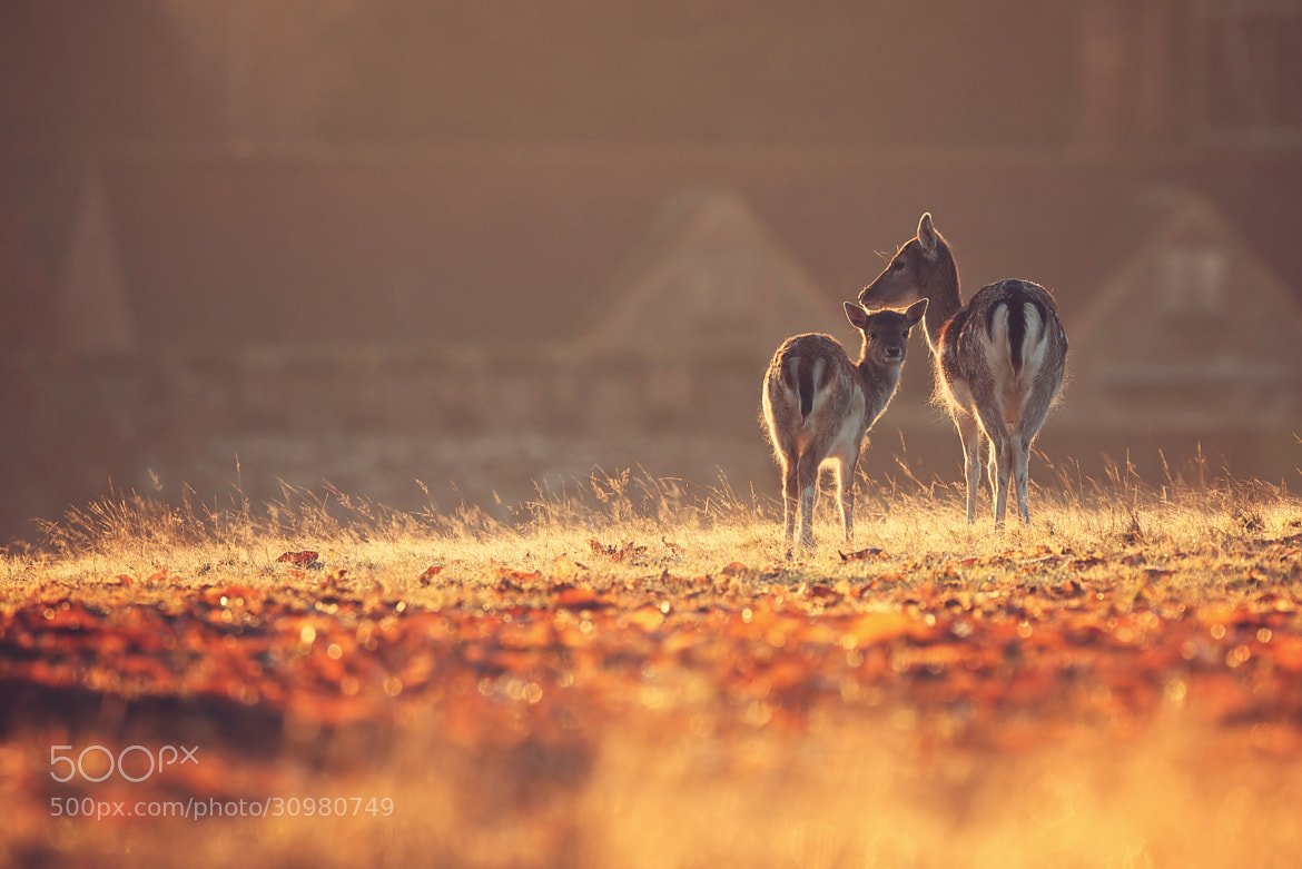Photograph home by Mark Bridger on 500px