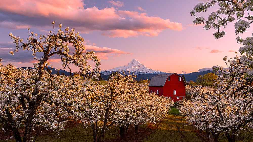 Photograph Blossoming by Henrik Anker Bjerregaard  Lundh III on 500px