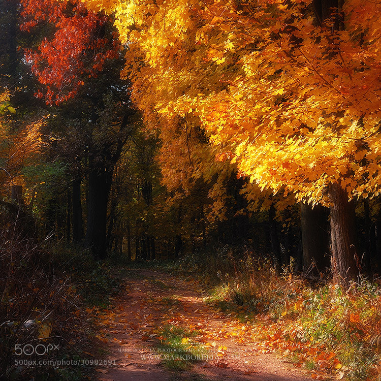 Photograph Fabulous Fall by Márk Borbély on 500px