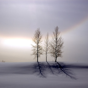 The Halo Of  A Family's Tree by Kent Shiraishi (KentShiraishi)) on 500px.com