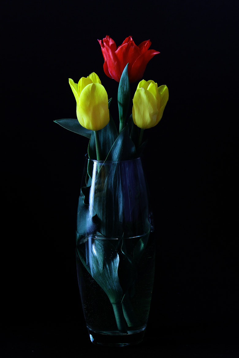 Photograph Tulip series by Photomania Photography on 500px