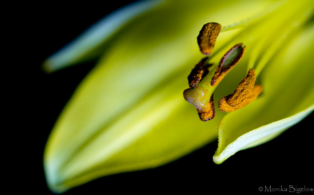 Photograph 129/365 Lily by Monika Bigelow on 500px