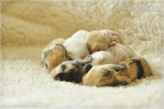 Photograph Babyrabbits by Malin Hultman on 500px