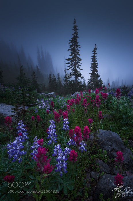 Photograph Lead by Alex Noriega on 500px