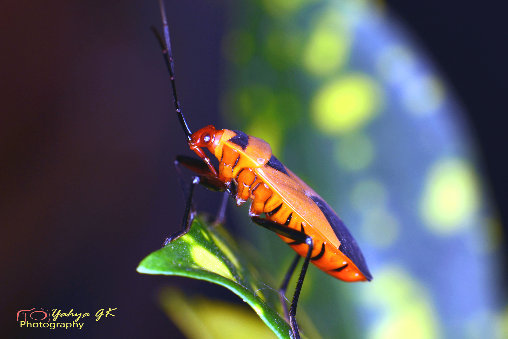 Photograph The Orange Insects by yahya GK™ on 500px