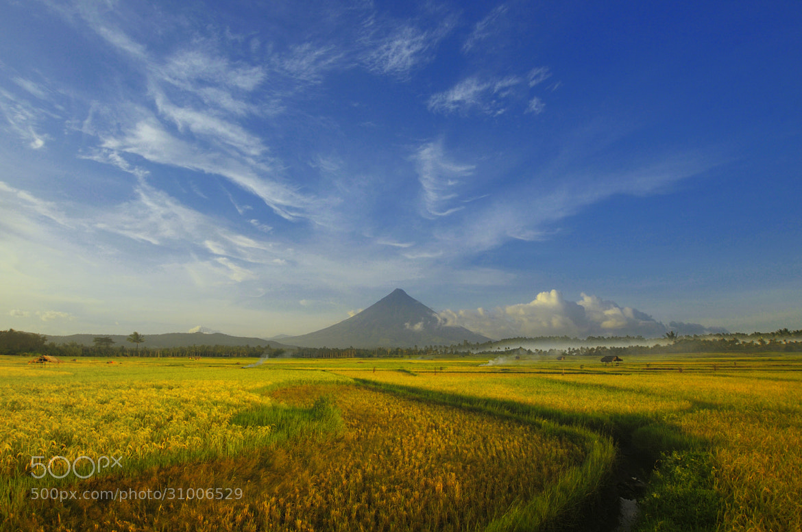 Photograph Golden Field by Dacel Andes on 500px