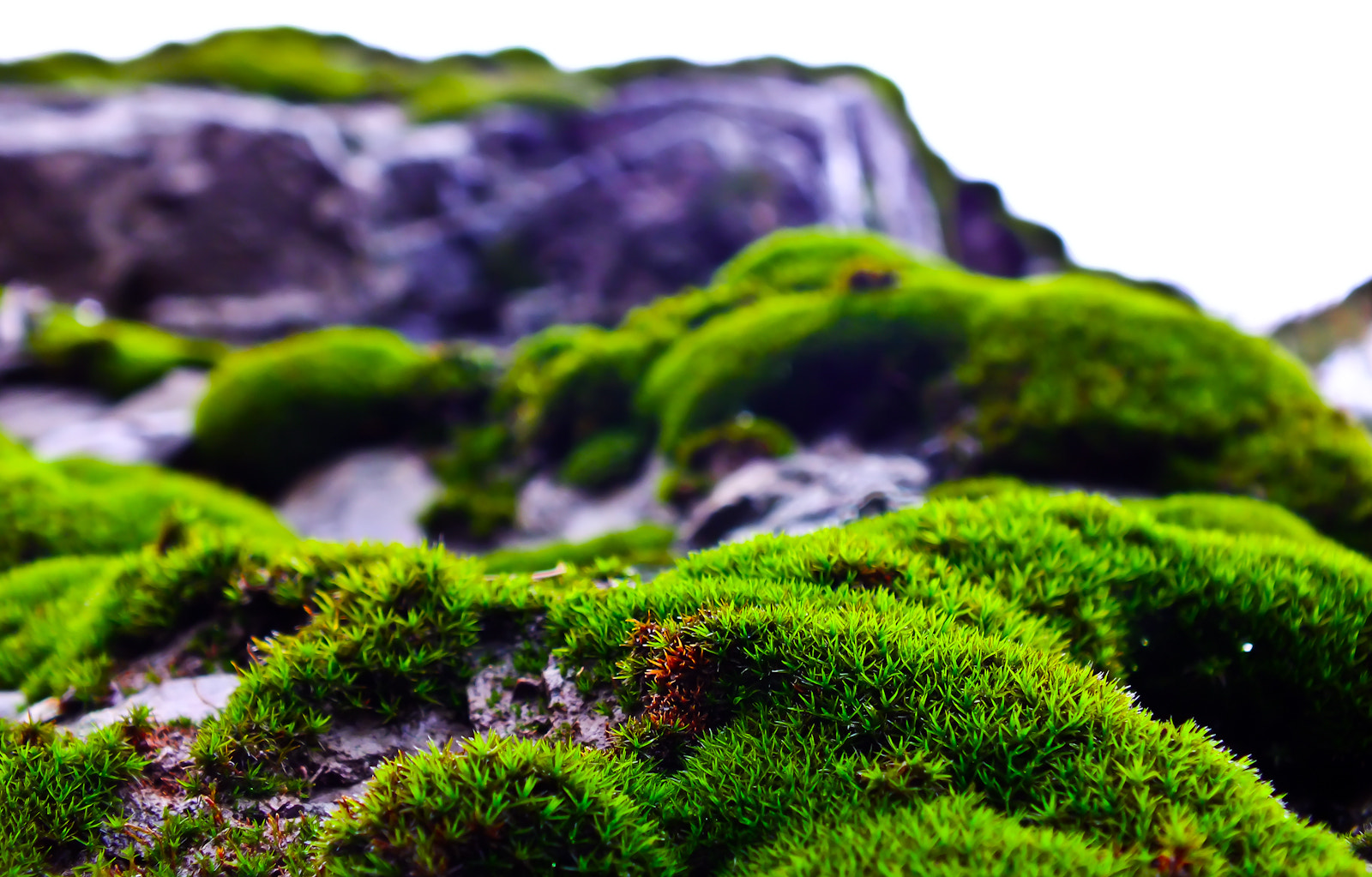 Photograph LicheN by ShayaN H on 500px