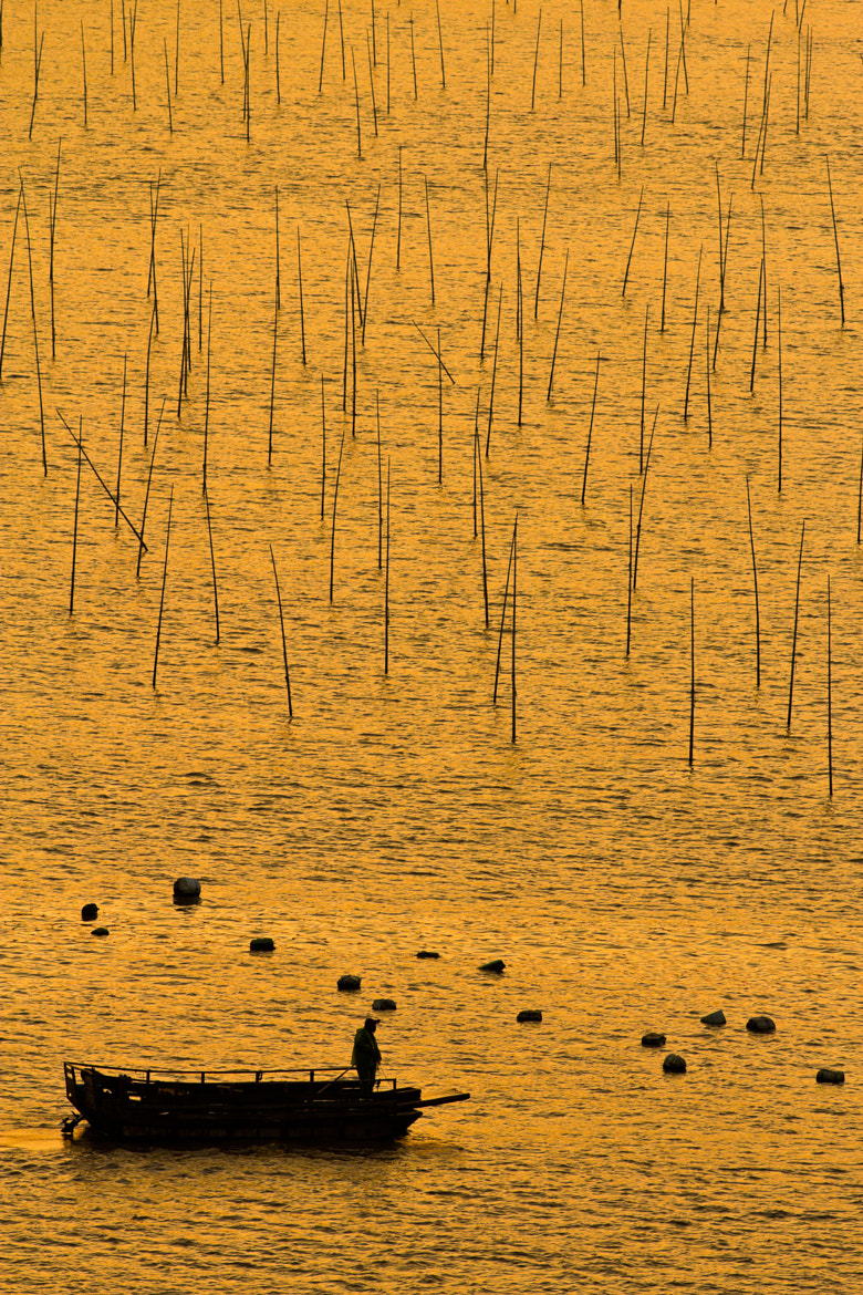 Photograph sea of gold by carlos-p on 500px