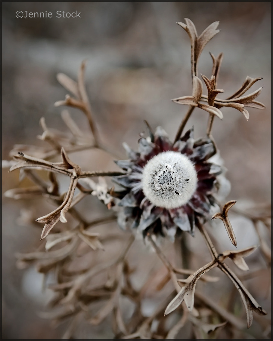 Photograph Dead but not done by Jennie Stock on 500px