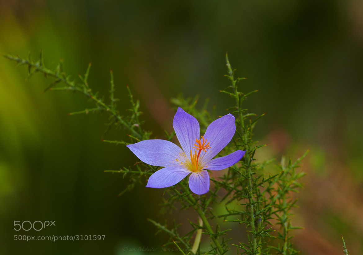 Photograph Flor en el campo by Juan Carlos Rodriguez on 500px
