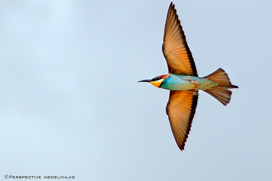 Photograph Flight .. by A.A abdelmajid on 500px