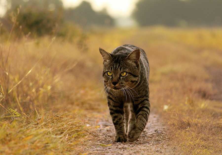 Photograph i'M FaT CaT by Prachit Punyapor on 500px