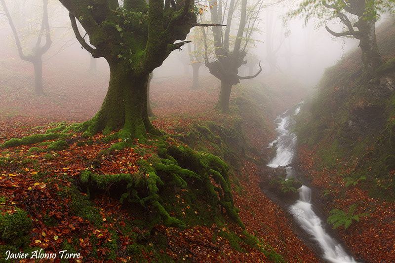 Photograph fairy tale by Javier Alonso Torre on 500px