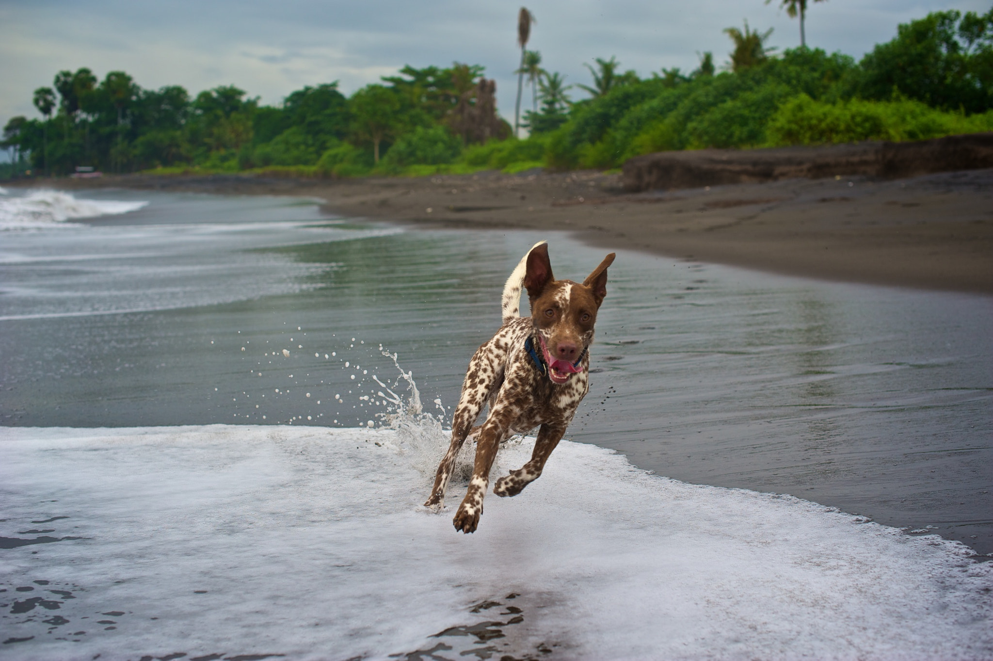 Photograph Balinese Dog by Max Ellis on 500px