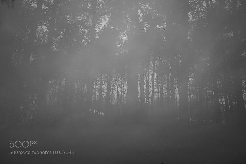 Photograph Misty minds by Elias Settevik on 500px