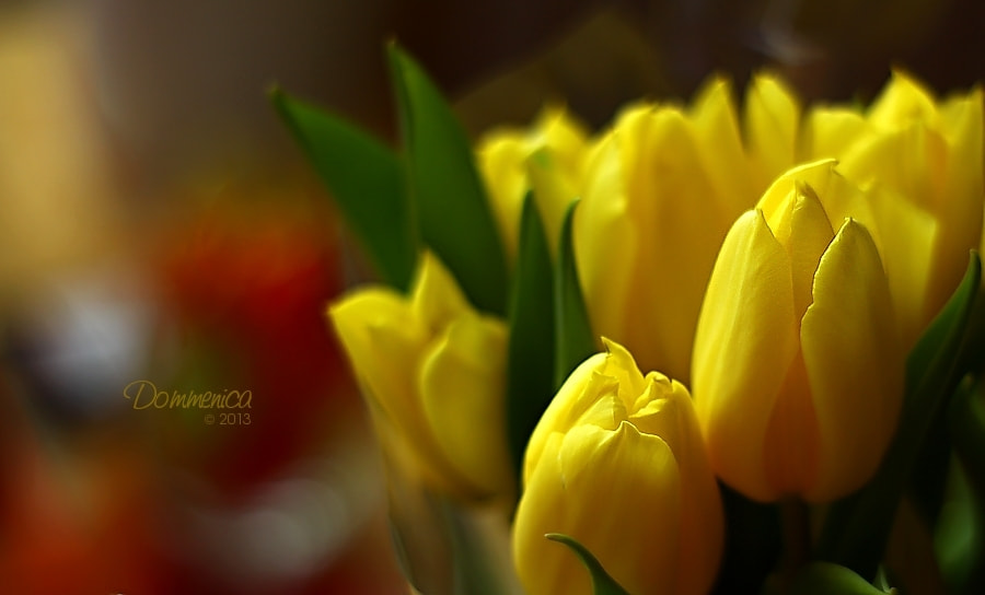 Photograph Yellow tulips by Dommenica on 500px