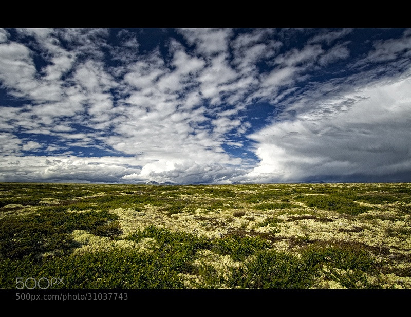 Photograph Nordic Colours Of Summer by Ruud van den Berg on 500px