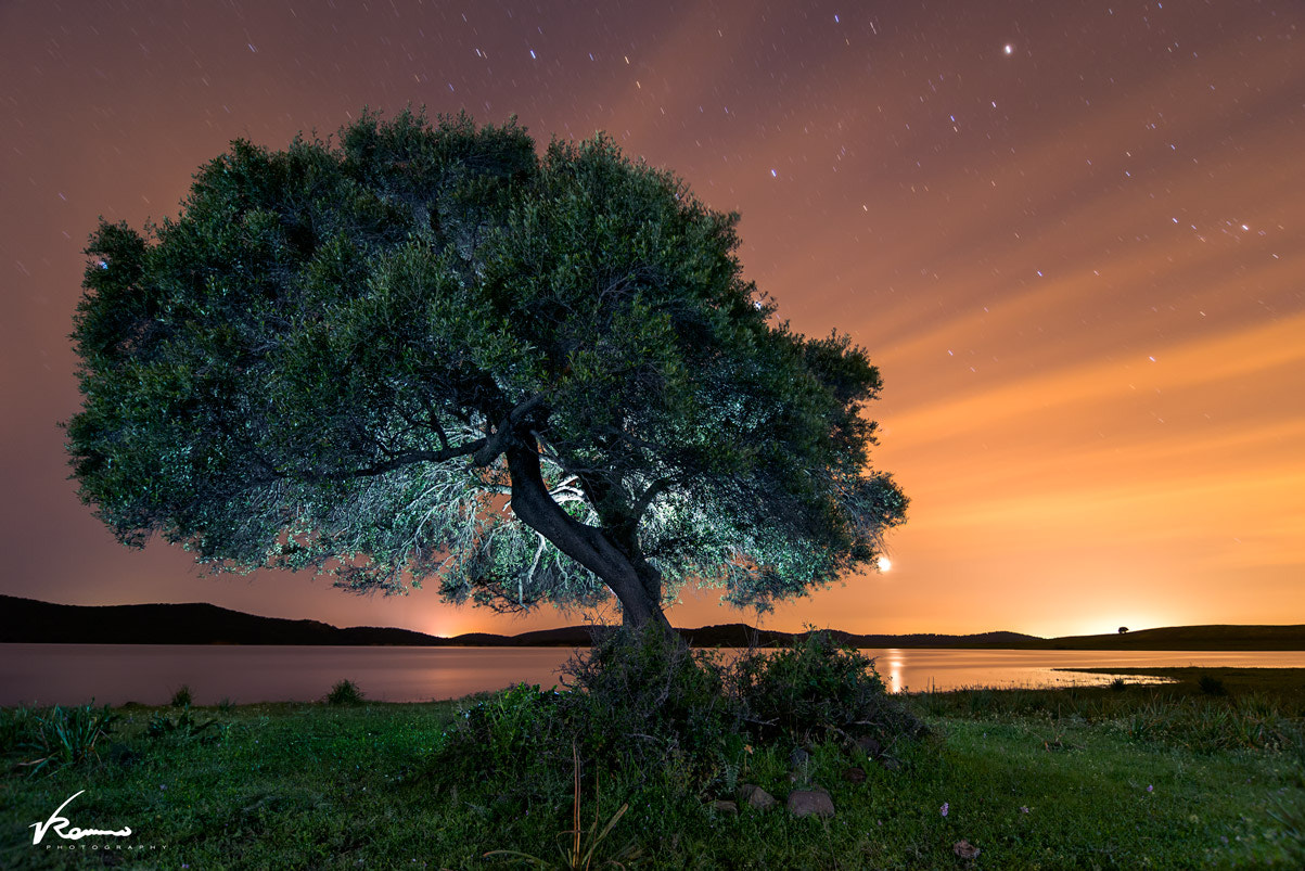 Photograph Tree Glow by Vicente Romero on 500px
