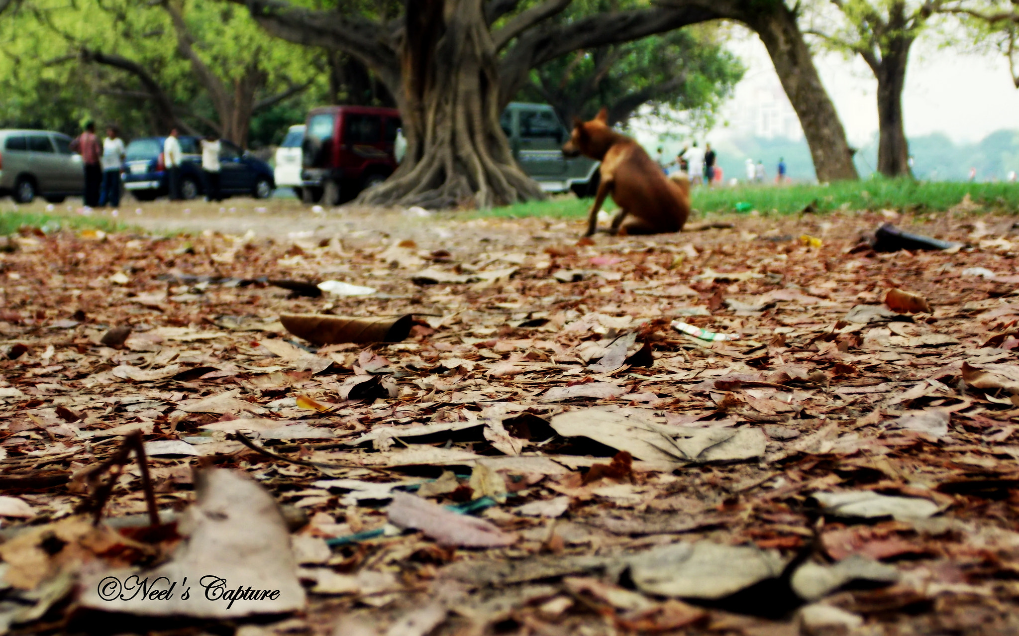 Photograph Stray leaves  by Neeldiganta Saha on 500px