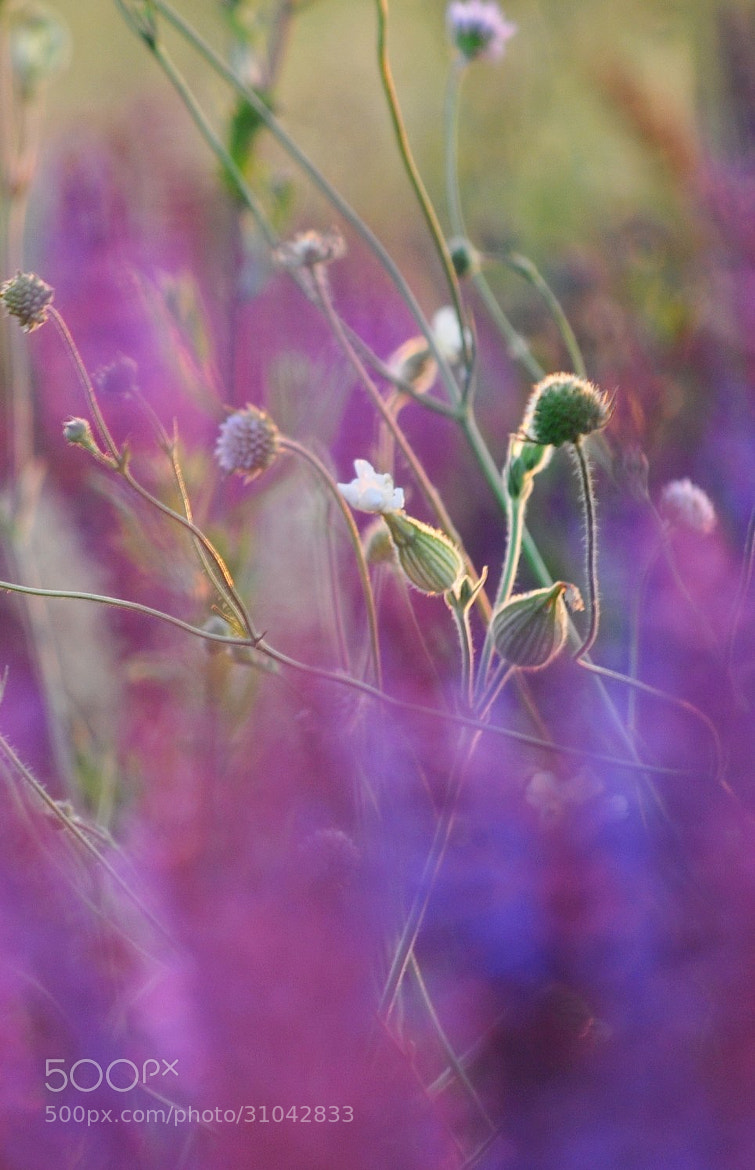 Photograph Fields Flowers by Adrian  Per on 500px