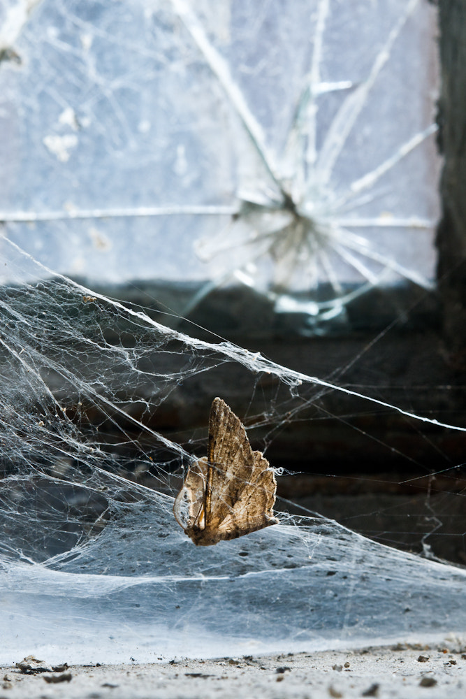 Photograph Trapped by Dave McGrath on 500px