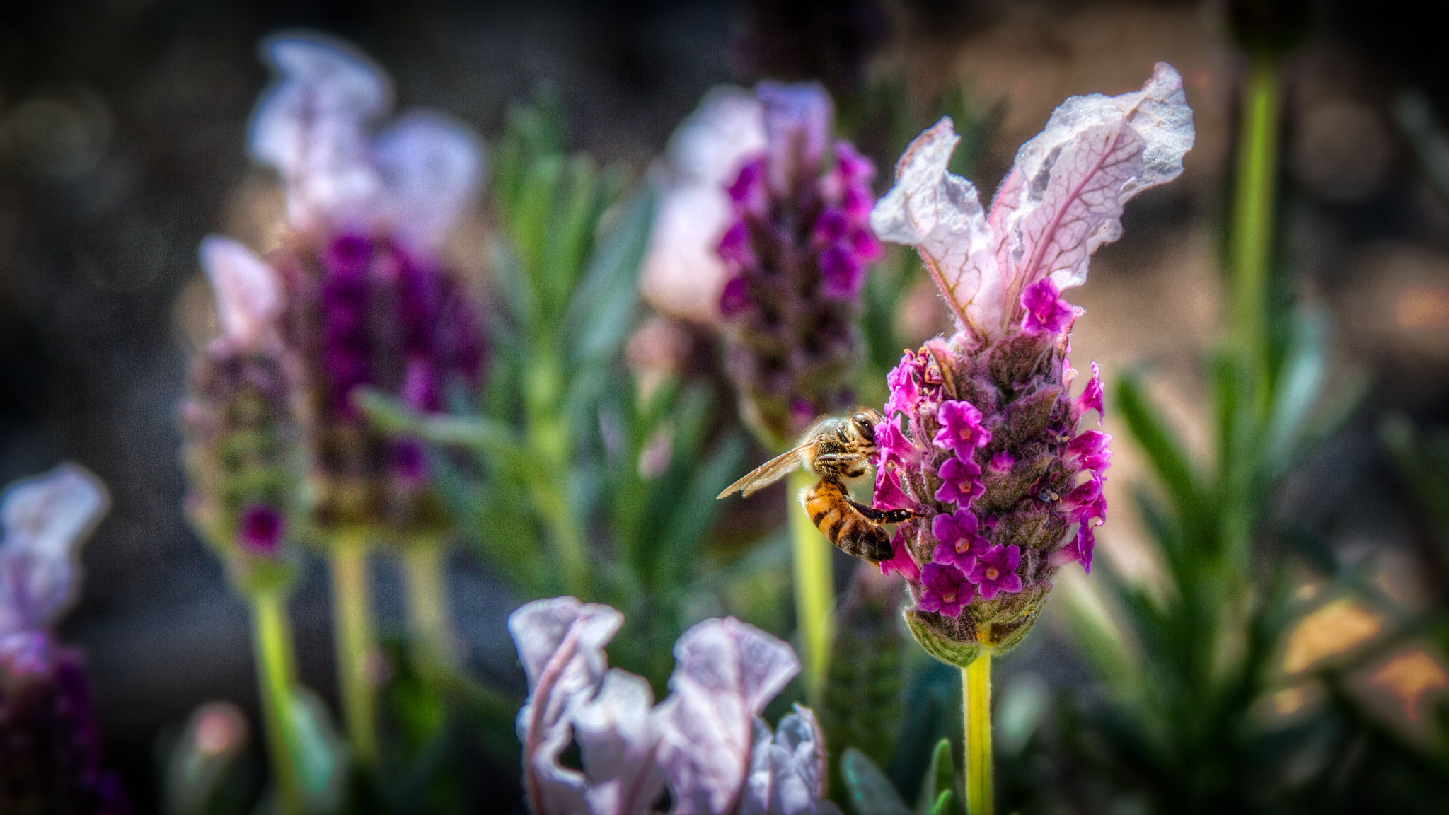 Photograph Bee Patient by Duane Keeling on 500px