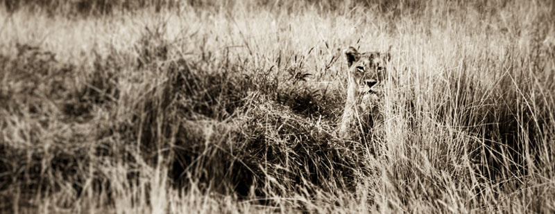 Photograph What could be watching by Timothy Griesel on 500px