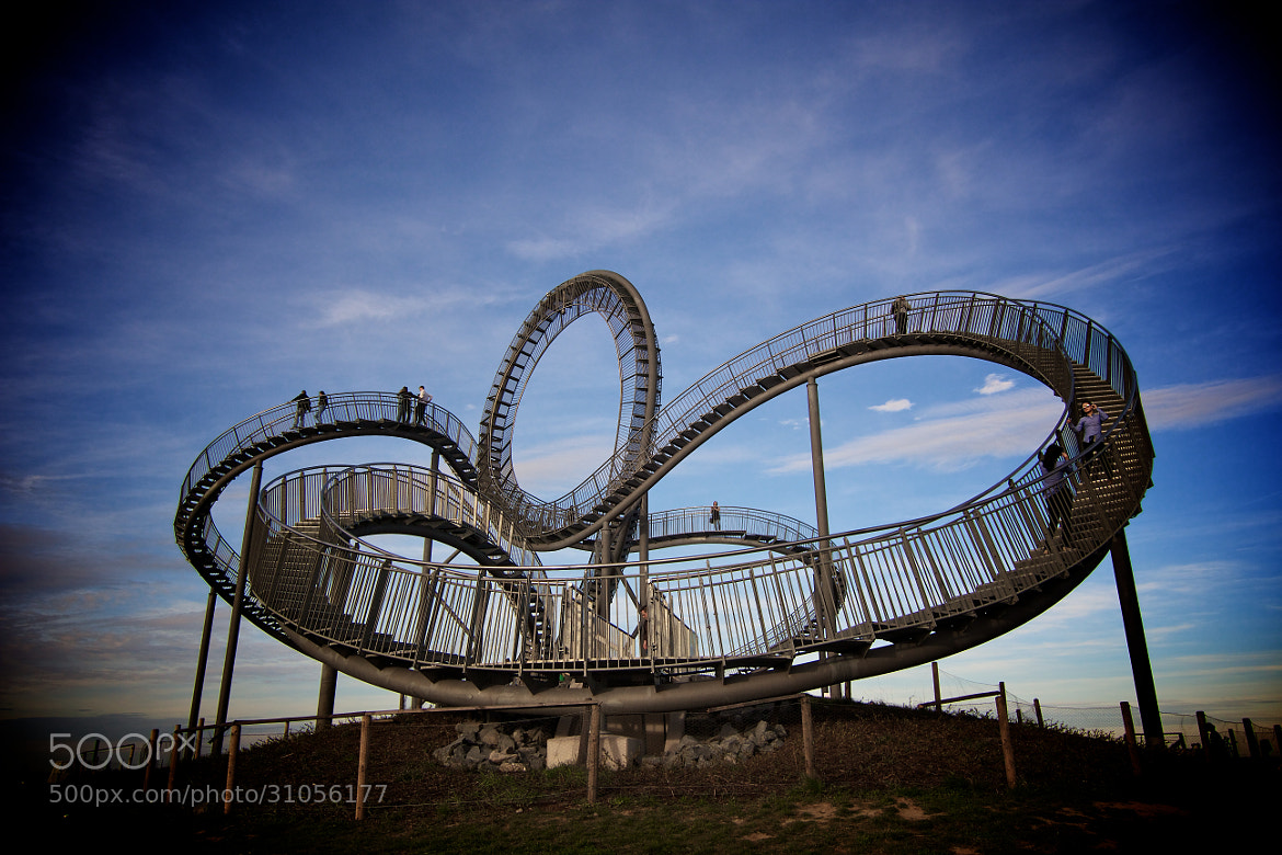 Photograph Tiger & Turtle 1 by Markus Kaufmann on 500px