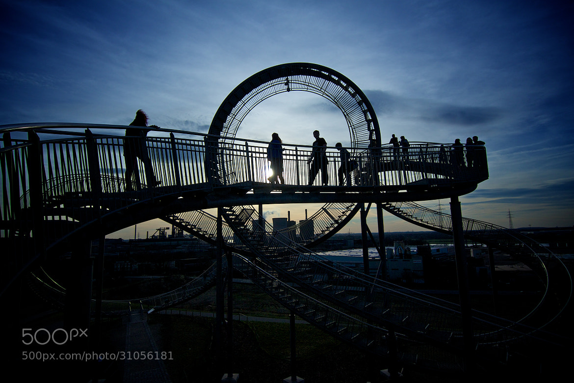 Photograph Tiger & Turtle 3 by Markus Kaufmann on 500px