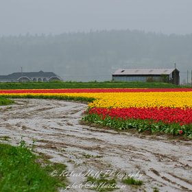 April in Skagit County