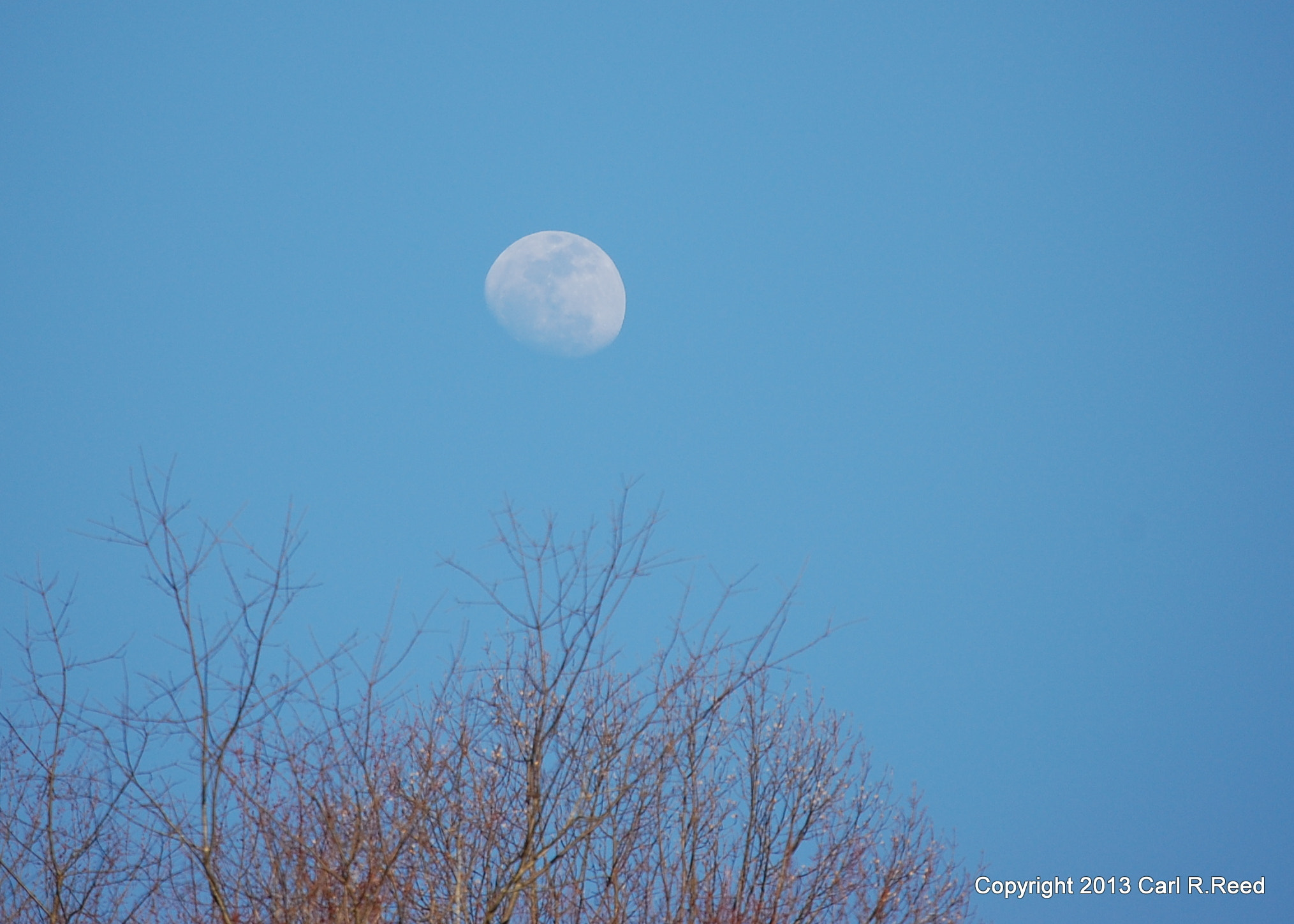 Photograph 3985-moon & trees by Carl Reed on 500px