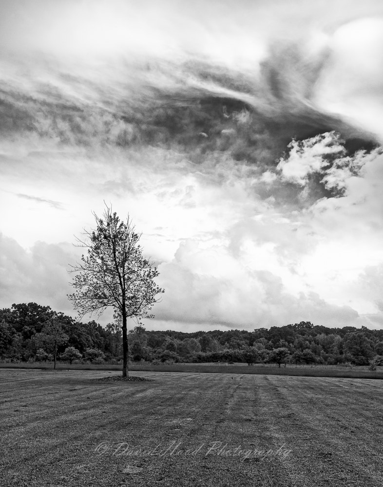 Photograph 20100521_Goodenow_Grove_01 by David Hood on 500px