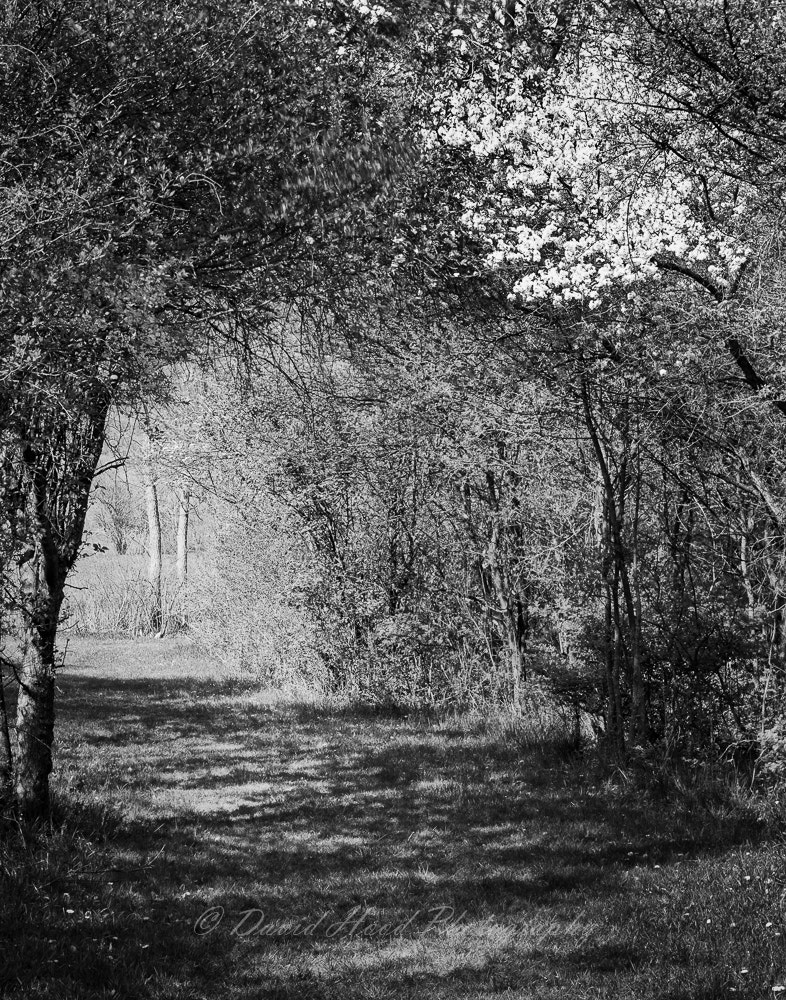 Photograph 20100421_Goodenow_Grove_01 by David Hood on 500px