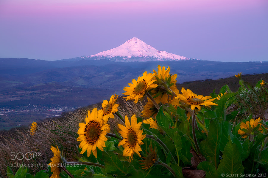 Photograph In the Hills by Scott  Smorra on 500px
