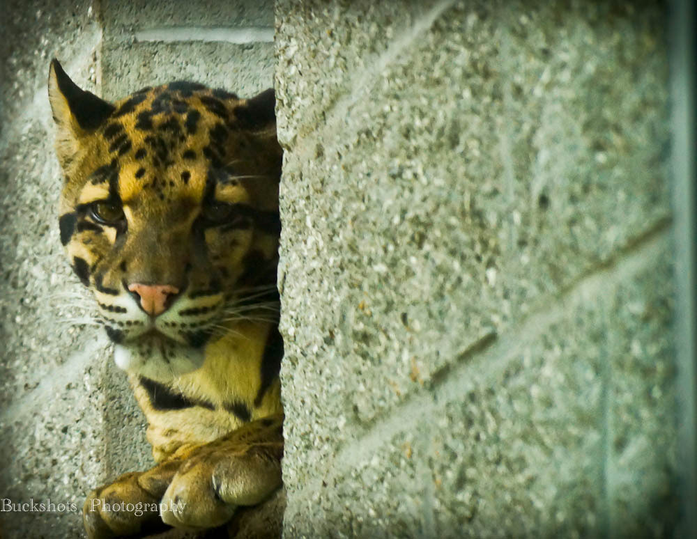 Photograph Urban Tiger by Dwayne Winters on 500px
