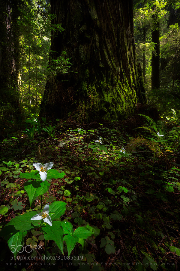 Photograph The Meek and the Mighty by Sean Bagshaw on 500px
