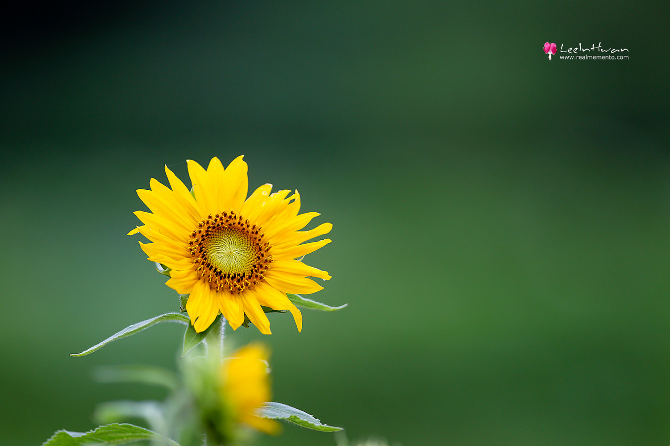 Photograph Smart Helianthus by LEE INHWAN on 500px
