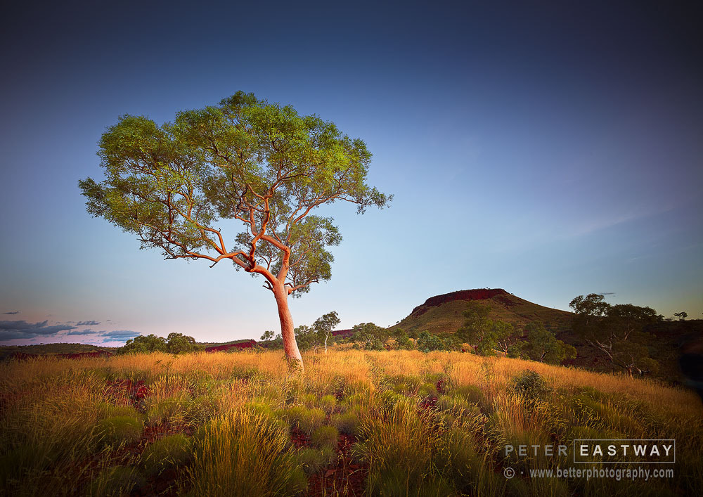 Photograph Karijini Trees 2 by Peter Eastway on 500px