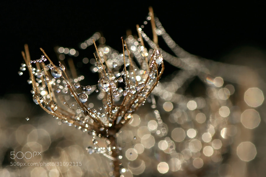 Photograph Sparkling by Roeselien Raimond on 500px