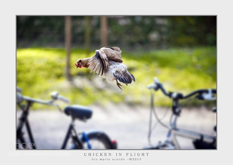 Photograph CHICKEN IN FLIGHT by Leo Maria Scordo on 500px