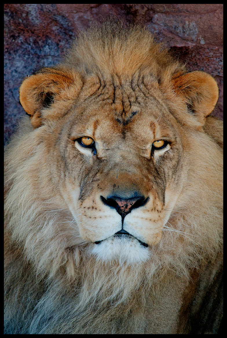 Photograph The King by Joe Branco on 500px