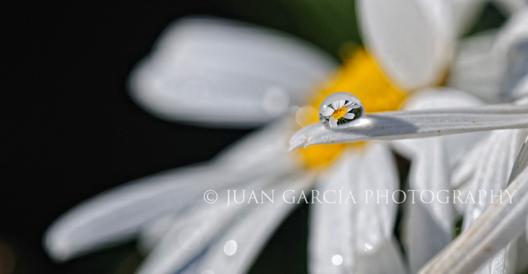 Photograph Life in a drop by Juan García on 500px