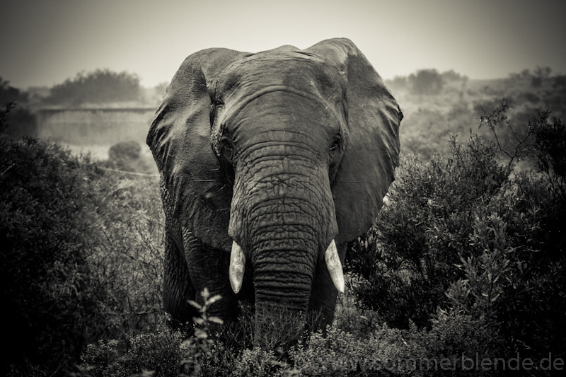 Photograph Elefant by Robert Sommer on 500px