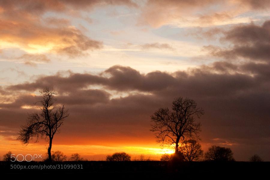 Gayton WildsNorthamptonshire,UK