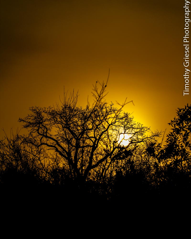 Photograph Kruger Sunrise 2 by Timothy Griesel on 500px