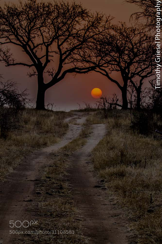 Photograph Road to the sun by Timothy Griesel on 500px